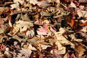 fallen leaves garden mulch Perth
