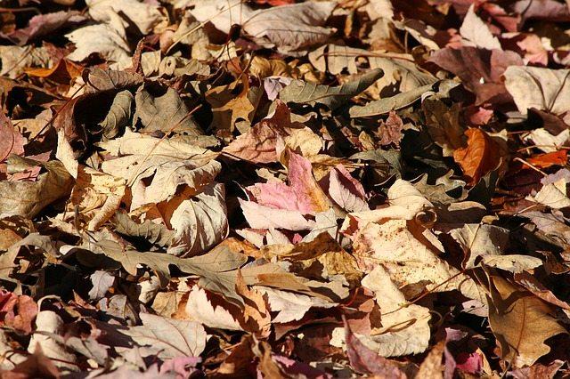 Fallen Leaves Winter Garden Mulch Perth Retic